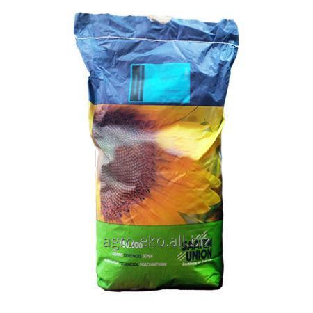 Buy Seeds of sunflower of Paraiso CL Saaten Junion