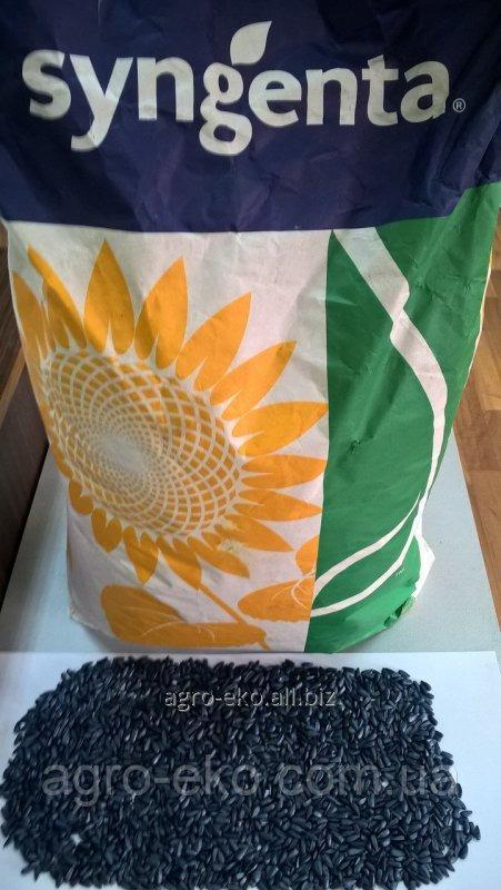 Buy Seeds of sunflower of the Tax Code of the Brio of Syngenta