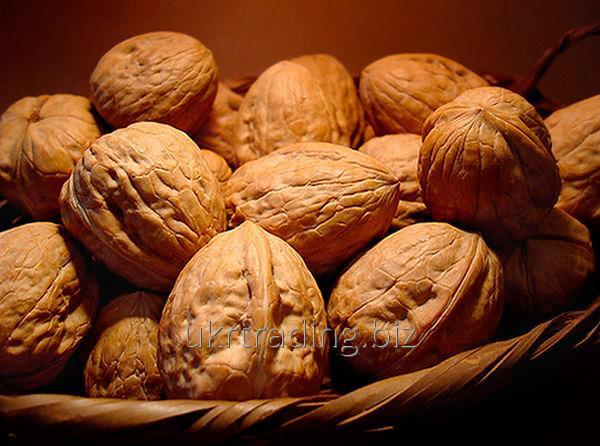 DELICIOUS WALNUTS with shell and unshelled Best product from Ukraine Best prices