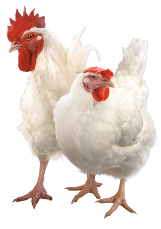 Multifermental feed additive for broilers