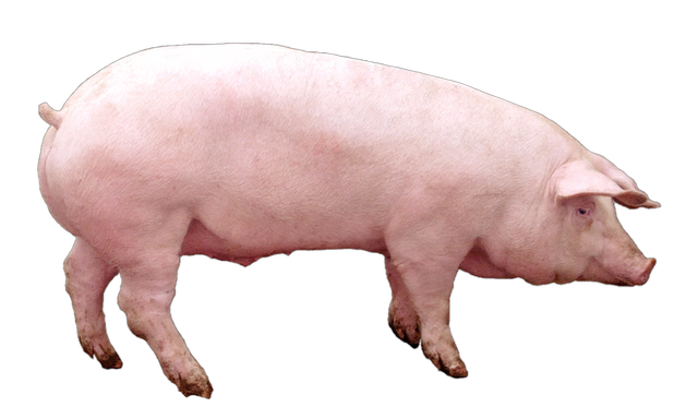 НАТУЗИМ - Мультиферментный комплекс для свиней