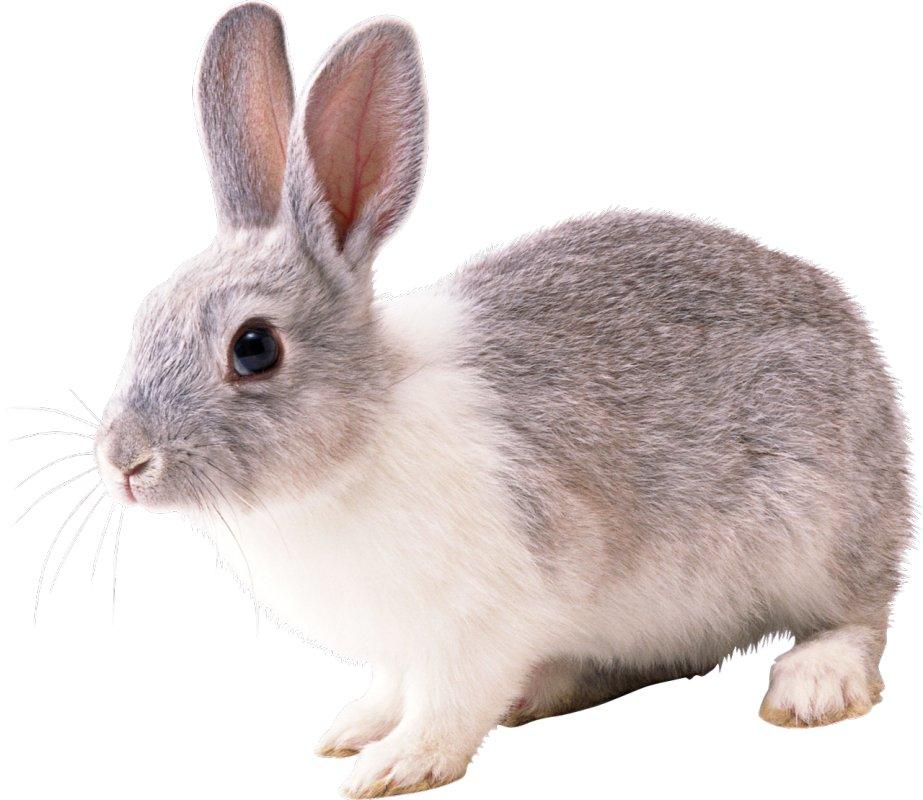 Премикс для кроликов Кролематки 4%
