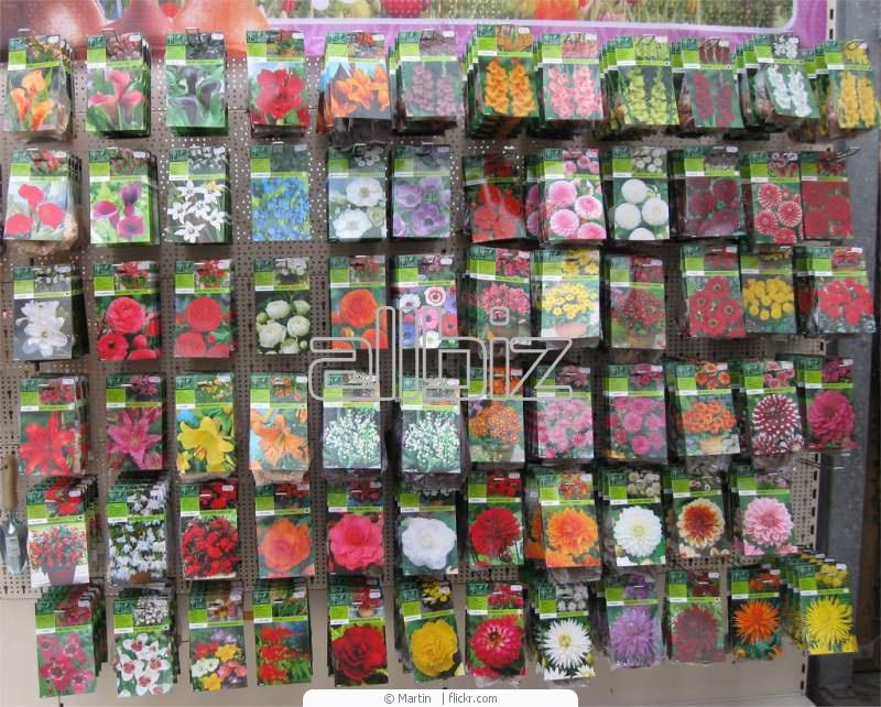 Где заказать семена цветов