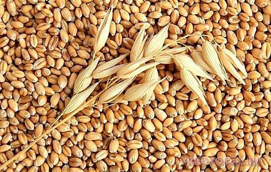3-grade hvete