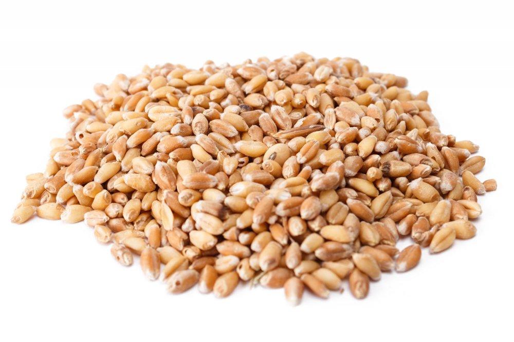 Зерно продовольственное