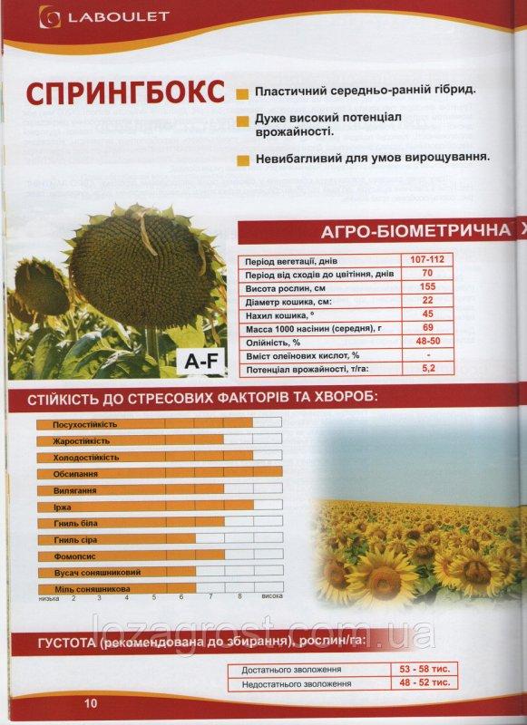 Семена подсолнечника Спрингбокс Лабуле Laboulet