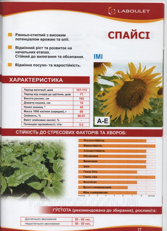 Семена подсолнечника Спайси Лабуле Laboulet евро-лайтинг