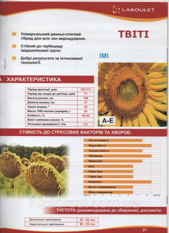 Семена подсолнечника Твити Лабуле Laboulet евро-лайтинг