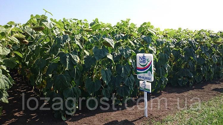 Семена подсолнечника НС-Х-2652 гранстар