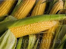 Семена кукурузы Серенада