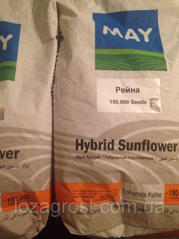 Семена подсолнечника Украина Рейна
