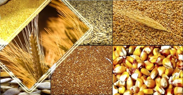 Купить Пшеница, соя, подсолнечник