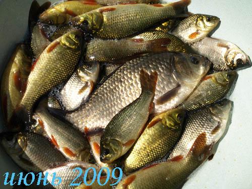 Купить Рыба живая