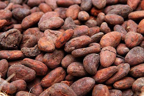 Купить Какао бобы