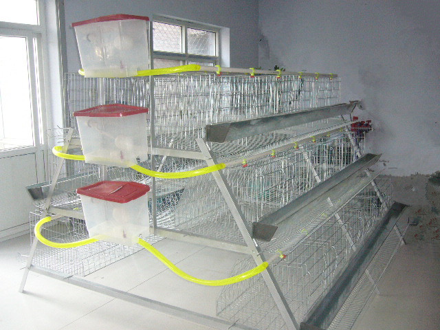Фото как сделать клетку для кур несушек