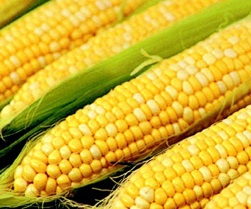 Buy The corn is fodder, Wheat fodder