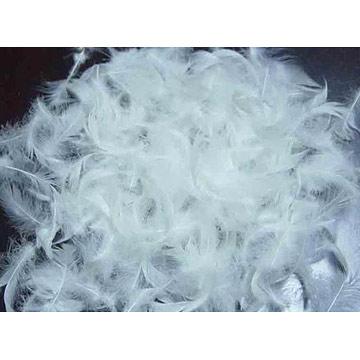 Купить Feather for export