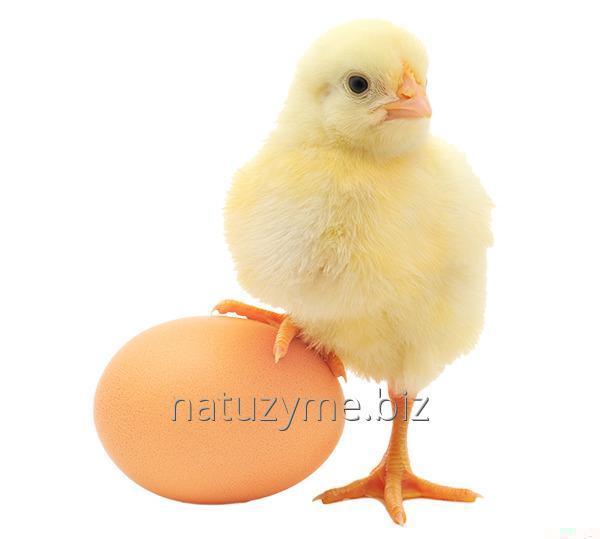 Корм для несушек (яйцекладка) гранула 100%