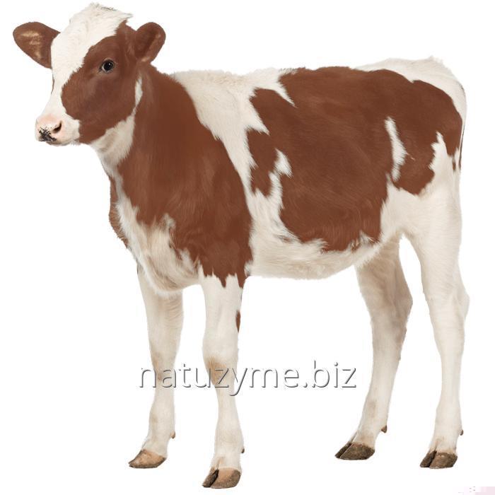 Premix for calfs of 2,5%