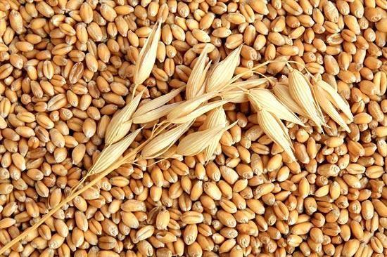 Экспорт казахстанской пшеницы вырастет на 8,3 % - прогнозирует Минсельхоз США