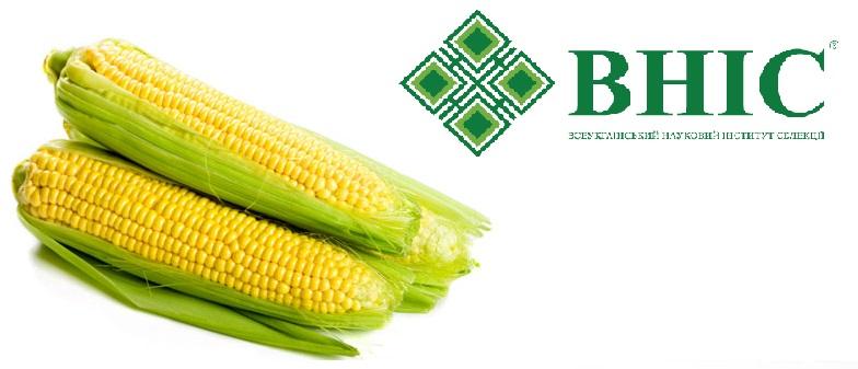 Семена кукурузы Гран 1 (ФАО 370)