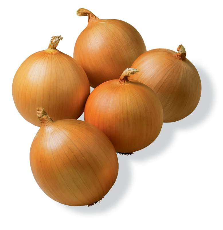 Семена лука  (Партия от 100 кг)