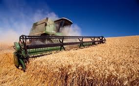 Купить Ячмень зерно, Херсонская область, Украина