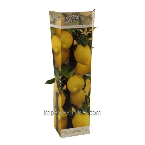 Цитрус Limon 'citroen