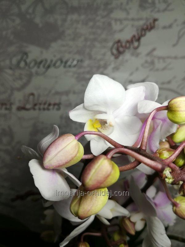 Мультифлора Willd Mix 12cm
