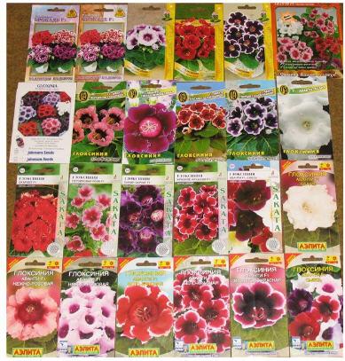 Какие цветы сажать в августе семенами 184