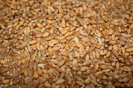 Buy Wheat second, third class