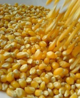 Купить Кукурузные зерна