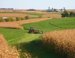 Купить Культуры зерновые Украина