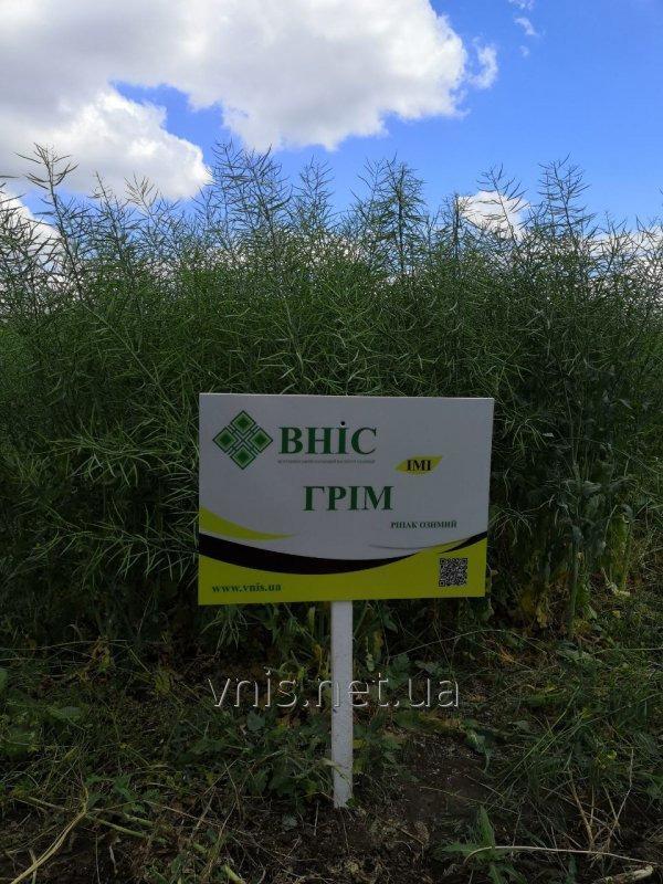 Семена озимого рапса Грим (РС+IMI)