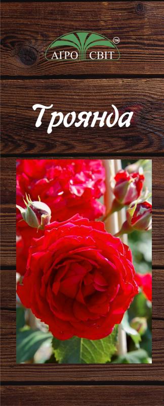 Купить Плетисті троянди