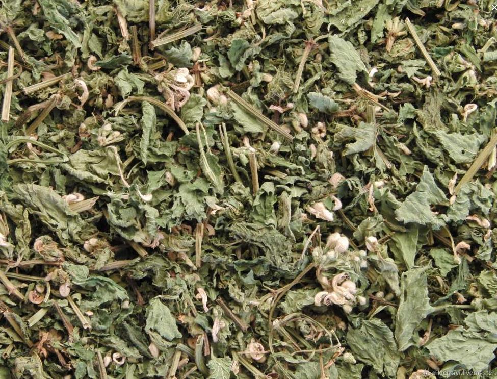 Купить Трава яснотки сушеная (Lámium álbum)