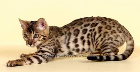 Buy Корм для кошек и котов