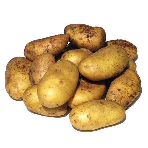 Семенной картофель оптом , Черниговская область, Украина, экспорт