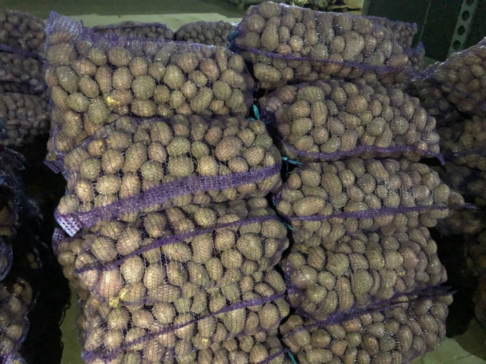 Купить Картофель Альвара