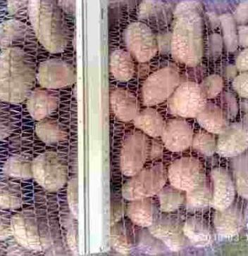 Картофель посадочный сорт Агата