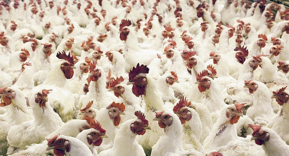 Купить Кормовой сорбент Ентеронормин Детокс с гепатопротекторними свойствами для птицы