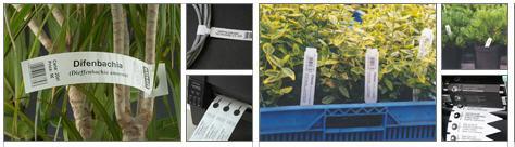 Labels: Garden plastic pins loops, Garden arrow, plastic