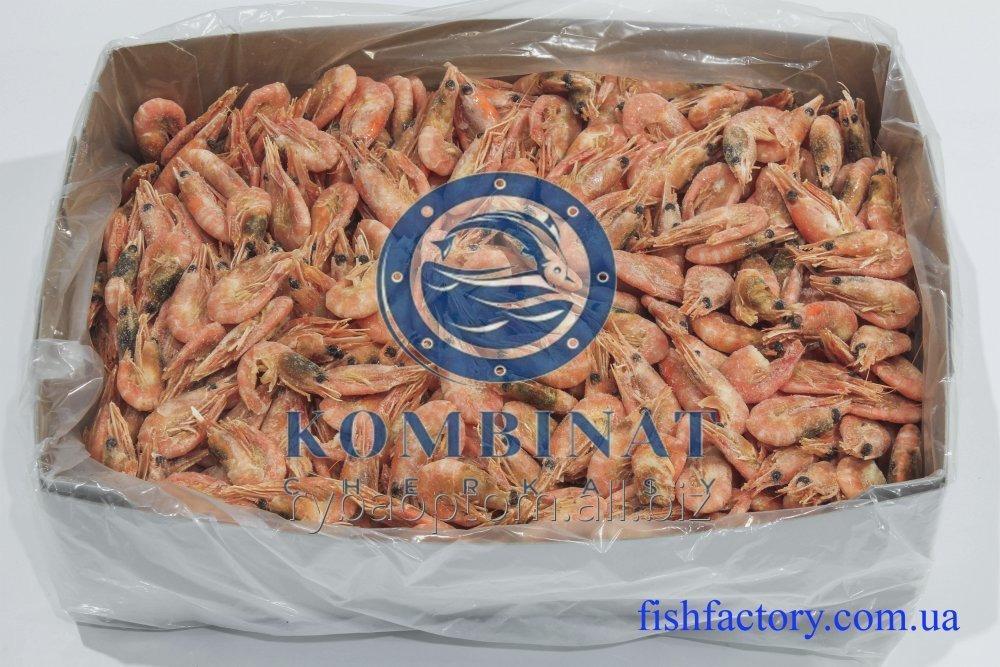 Buy Shrimp Azov