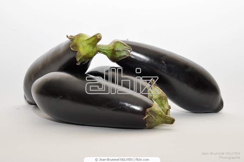 Buy Eggplant.
