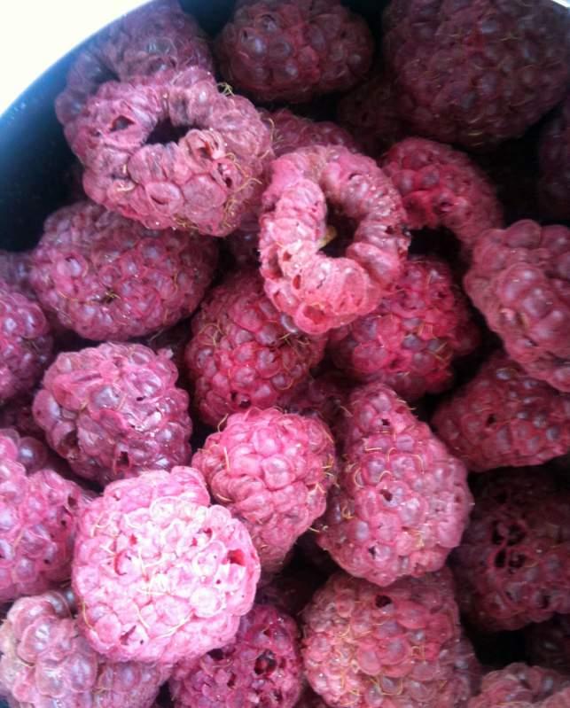 Buy Raspberry Dried