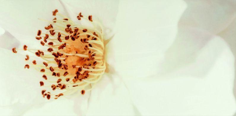 Декор Opoczno Diago Beige Inserto Flower A