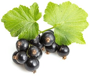 Buy Currant berry dry