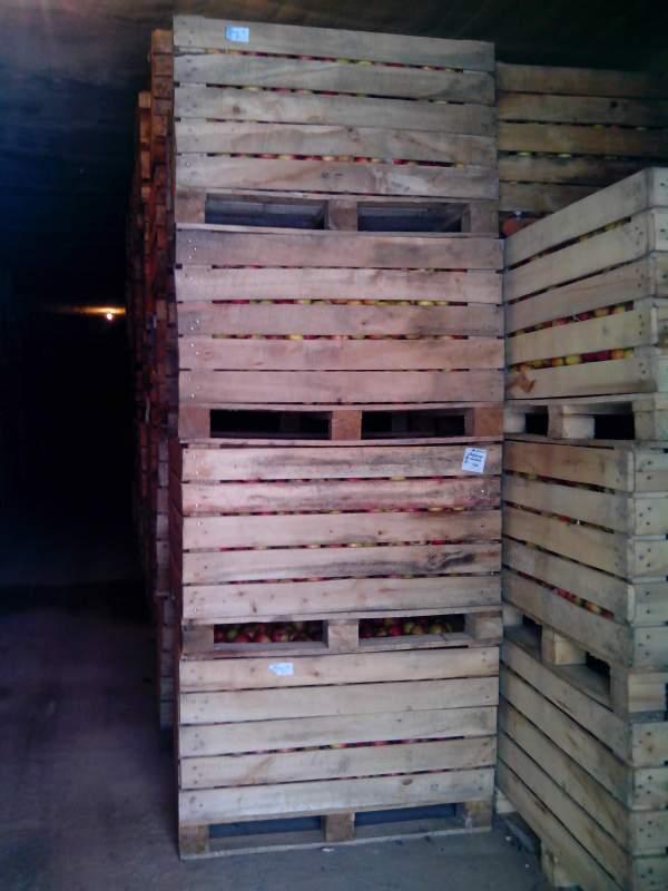 Купить Яблоки осенние на экспорт