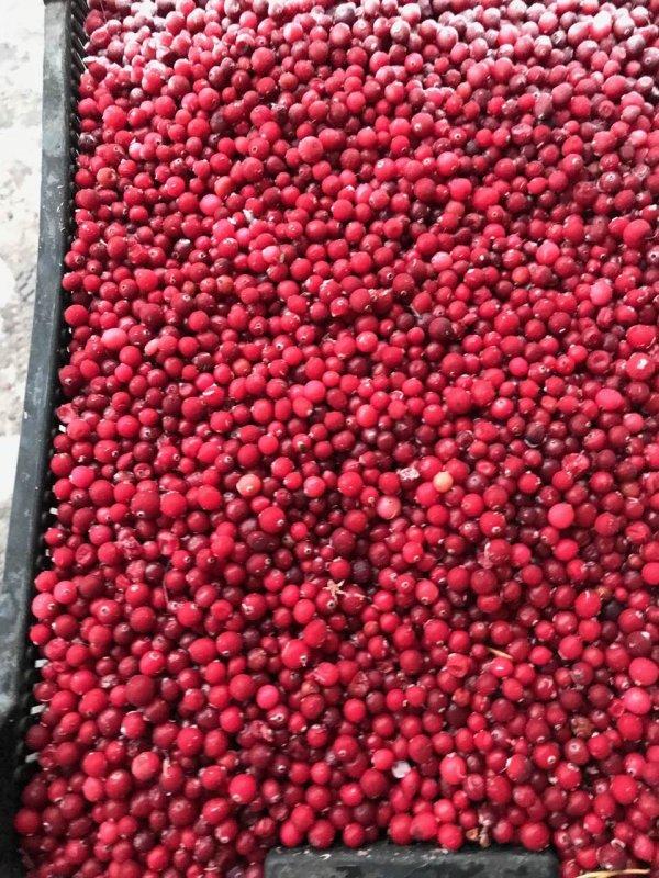 Buy Frozen cranberries