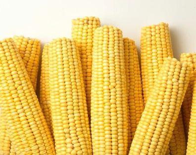 Купить Кукуруза продовольственная